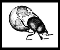 The New York Entomological Society